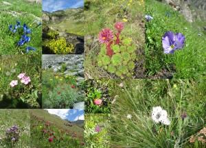 Raznovrstnost planinskega cvetja in en predstavnik planinskih živali